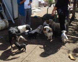Denuncian matanza de perros en Villa Correntoso.