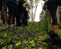 Presentación de proyectos para Eco huertas Angostura