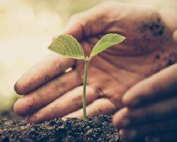 Un millón de árboles en un año: la nueva campaña sustentable para ayudar al planeta