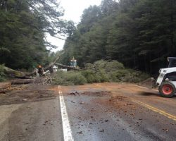 Realizarán cortes sobre la Ruta 40 por podas de árboles